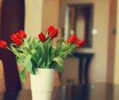 В Архангельске женщин поздравляют с 8 марта