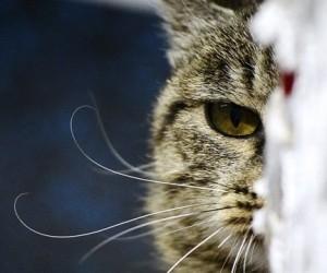 В Архангельске открыта «кошачья выставка»