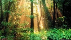 Пенсионерка заблудилась в лесу и ждала помощи целые сутки