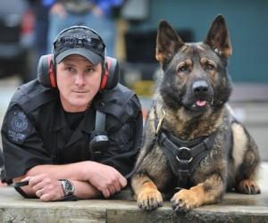 Собака помогла задержать убийцу пенсионера из Архангельска