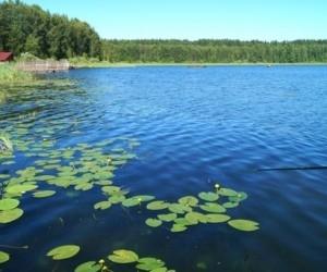 В Онежском районе утонула женщина во время купания
