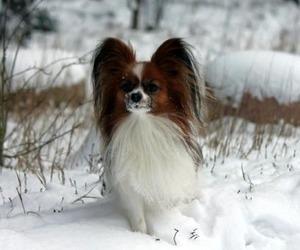 В Северодвинске две породистые собаки выпали из окна