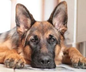 В Архангельске из окна выбросили собаку