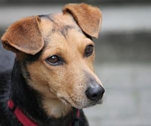 В Архангельской области собака спасла мужчину из пожара