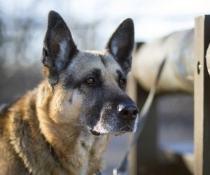 За нападения собаки на школьницу хозяин заплатит штраф
