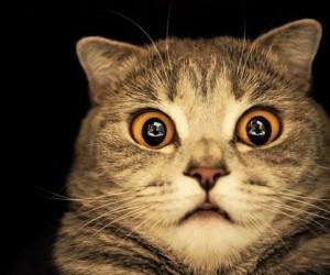 В Поморье кот спас жителей дома от пожара