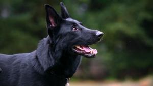 Спасатели Архангельска вытаскивали из ямы собаку