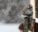 13 декабря в Архангельске прогнозируют сильный снег