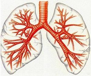 Новые технологии в в лечении органов дыхания