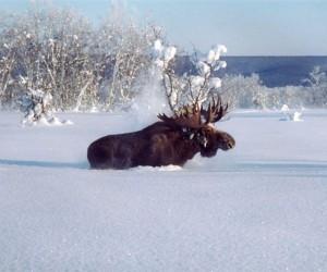 В Архангельской области вместо лося, охотник убил своего друга