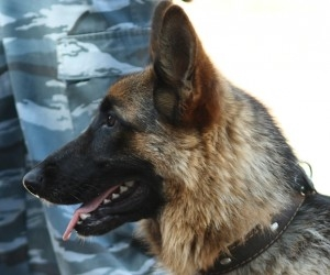 Служебная собака нашла подростка в заброшенном доме