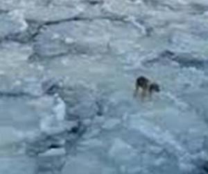 В Архангельске спасали щенка из холодной воды Северной Двины