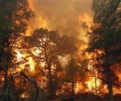 В Верхнетоемском районе уже третий день бушует лесной пожар