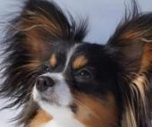 Северодвинца, который выбросил из окна двух собак, ждет суд