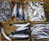 Жительница Архангельска продавала опасную для жизни рыбу