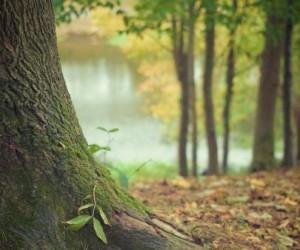 Под Архангельском пенсионер 5 дней блуждал по лесу