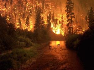Губернатор Архангельской области всерьез занялся проблемой тушения лесных пожаров